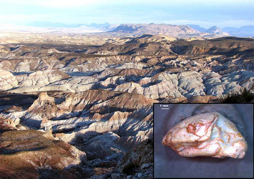 "A fossilized skull of the ""Lone Star"" lizard, a new genus and species of extinct worm lizard, and a view of the West Texas environment where it was found. Image credit: Michelle Stocker and Chris Kirk"