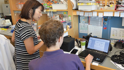 Dr. Akiko Iwasaki's lab explores how the body's natural recognition of viral infections lead to adaptive immunity that protects against new infections. Photo credit: Carissa Violante