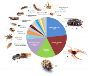 This graphic shows the proportional diversity of arthropod types across all of the rooms surveyed. Image credit: Bertone, et al. (Click image to enlarge)
