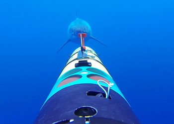 The team was able to tag four sharks. However, most of the encounters REMUS SharkCam documented were with animals that were not being tracked, but rather with animals who were tracking SharkCam. The REMUS SharkCam is outfitted with 6 HD video cameras to enable researchers to study the animal in its habitat and behavior from multiple angles and perspectives. (Image credit: Oceanographic Systems Lab/Woods Hole Oceanographic Institution)