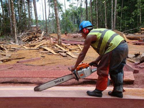 FSC-Waldstück in Zentral-Guyana mit aktuellem Holzeinschlag. Image credit: © Senckenberg