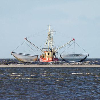 Krabbenfischerei in der Nordsee © Rössner / WWF