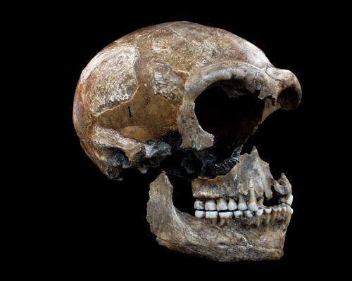 Das Kollagen aus den Knochen der Neandertaler gibt Auskunft über deren Ernährungsweise. Image credit: © Bocherens