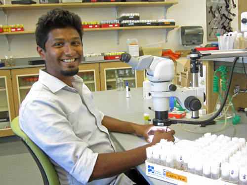 Nitin Phadnis, a University of Utah assistant professor of biology, has published a paper in the journal Science identifying a long-sought gene involved in forming new species. The gene normally kills hybrids of two closely related species of fruit flies, keeping the two species distinct. Photo credit: Lee J. Siegel