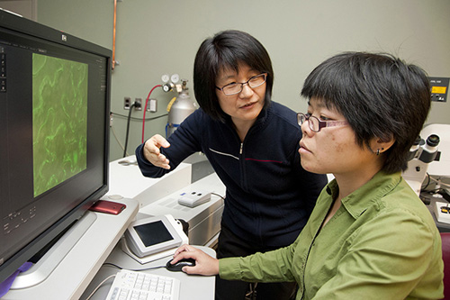 Jung-Youn Lee (left) and Weier Cui are conducting research on plant communication channels. Photo by Wenbo Fan