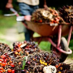 Palmölanbau Indonesien. Image credit: © James Morgan / WWF