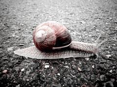 Auch Schnecken benötigen Metalle, um zu überleben. Photo credit: ObjektivKRAFT  (Source: Flickr)