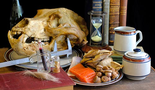 Still life of grizzly bear (Ursus arctos) with diet inferred from multiple diet proxies, including isotopes of hair, teeth, and blood. (Photo courtesy of the Yale Peabody Museum of Natural History)