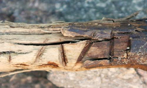 Am Vorderen Umbaltörl auf 2.926 m Höhe fanden die Wissenschaftler ein 2.500 Jahre altes Holzstück mit gut sichtbaren Kerben, dessen Zweck noch untersucht wird. (Foto credit: Thomas Bachnetzer)