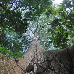 Regenwald. Image credit: © Roberto Maldonado / WWF