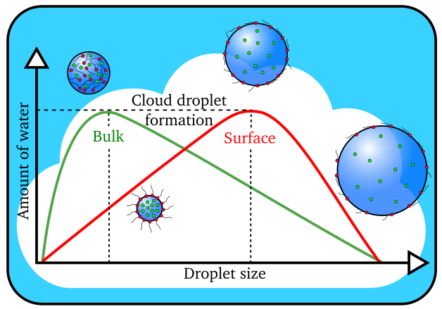 Cloud droplets form when the amount of water vapor reaches a threshold value. Larger cloud droplets form when organic molecules (in red) are present on the surface instead of dissolving in the interior, or bulk, of the droplet. (Image by James Davies, Berkeley Lab)