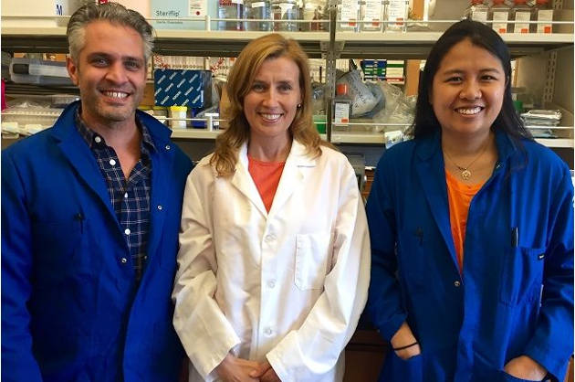 Vincenzo Calvanese, Dr. Hanna Mikkola and Diana Dou are working toward being able to create hematopoietic stem cells in the lab so that they are a perfect match for transplant recipients. Image credit: UCLA Broad Stem Cell Research Center