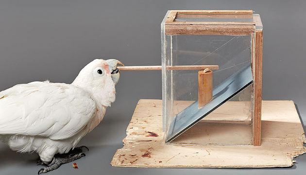 Vogel bedient Stock-Apparatur (Image copyright: Bene Croy).