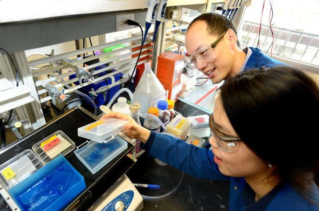 Chris Chang and UC Berkeley graduate student Sumin Lee carry out experiments to find proteins that bind to copper and potentially influence the storage and burning of fat. (Image credit: Peg Skorpinski/UC Berkeley)
