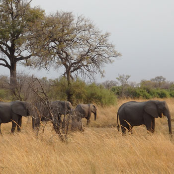 Afrikanische Elefanten. Image credit: © Claudia Marloh / WWF