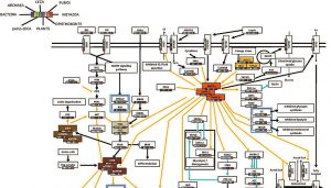 Das zentrale Regulationsnetzwerk des Energiestoffwechsels in eukaryotischen höheren Lebensformen. In sogenannten prokaryotischen, also einfacheren Lebensformen wie Bakterien oder Archaea, sind diese Regulationsnetzwerke nicht oder nur teilweise vertreten. Abbildung modifiziert nach Roustan et al. 2016 (Click image to enlarge).