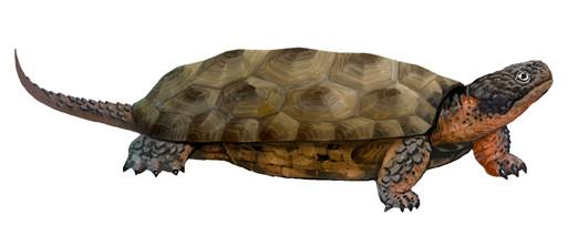 Rekonstruktion der neu entdeckten bezahnten Schildkröte Sichuanchelys palatodentata aus dem Oberen Jura der westlichen Wüstenregion Chinas. Künstlerische Darstellung: Lida Xing