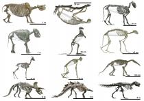 Landwirbeltiere: Eine Tiergruppe mit vielen unterschiedlichen Körpergrößen und formen. Image credit: © Marcus Clauss, Universität Zürich