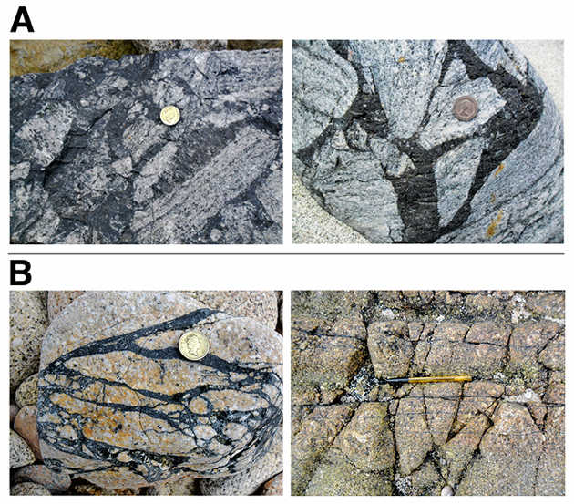 These pseudotachylites — fine grained rocks — are from the British Isles.  Image credit: Yale University