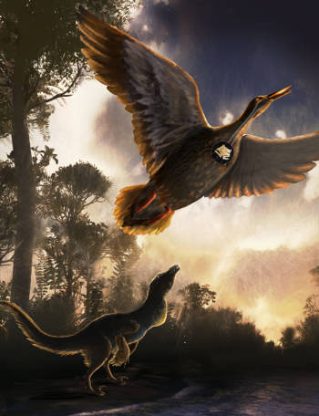 In a Nothofagus forest on the shoreline of Vega Island, Antarctica, a mid-sized raptor dinosaur is shown using close-mouth vocal behavior and Vegavis iaai is flying overhead. Image credit: Nicole Fuller/Sayo Art for UT Austin.