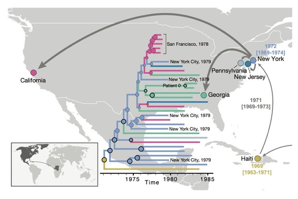 After HIV moved from Africa to the Caribbean, it first spread to New York and subsequently to different locations in the U.S. By constructing evolutionary trees of the various HIV strains as far back as the 1970s, the researchers found evidence that the virus had been circulating under the radar for 10 years before the outbreak in the U.S. was recognized. (Illustration credit: Worobey et al.)