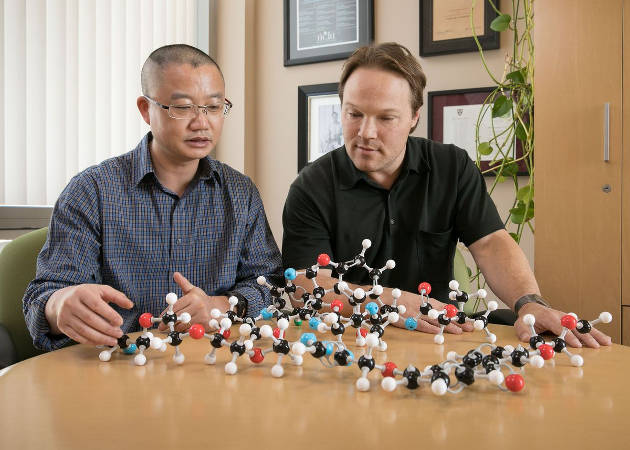Hui Ding and Patrick Harran with a model of DZ-2384, which holds promise for treating cancer while minimizing the painful side effects associated with common chemotherapy drugs. Image credit: Reed Hutchinson/UCLA