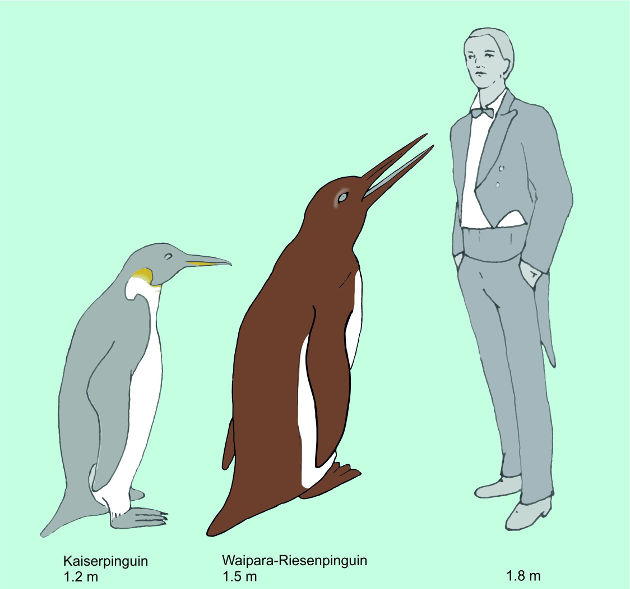 Der Waipara-Riesenpinguin im Größenvergleich zu einem Kaiserpinguin (dem größten lebenden Pinguin) und einem Menschen. Image credit: © Senckenberg