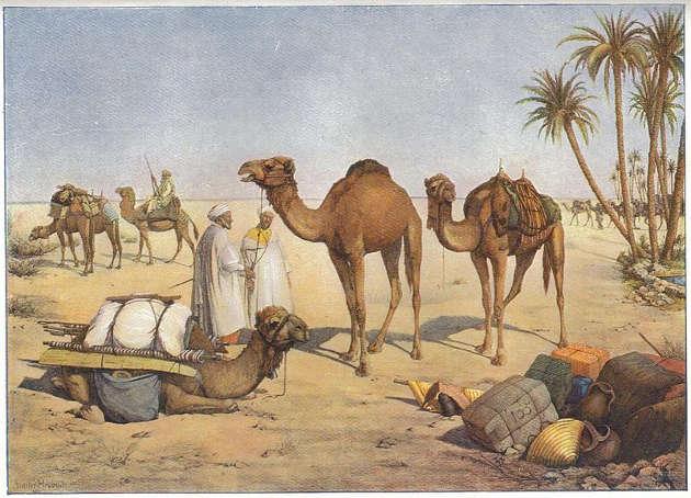 Kamele wurden von Nord-Indien bzw. Pakistan nach Australien exportiert. Dort sollten die hitzefesten Tiere bei den Expeditionen ins Landesinnere helfen. Image credit: Walter Heubach (Source: Wikipedia)
