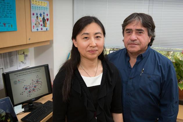 Xia Yang and Fernando Gomez-Pinilla. Image credit: Reed Hutchinson/UCLA