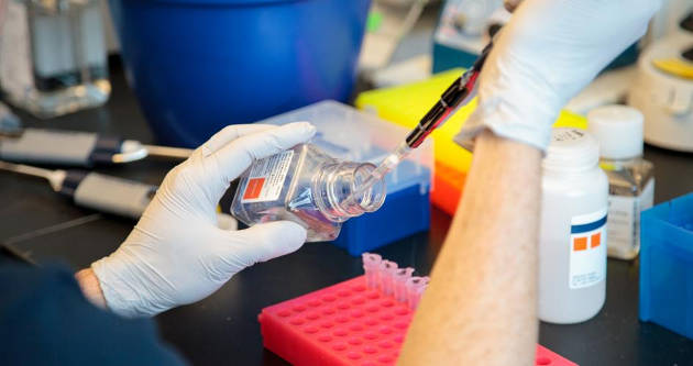 Researchers find reoviruses can trigger immune response to gluten, further implicating viruses in the development of autoimmune disorders. Photo by Matt Wood