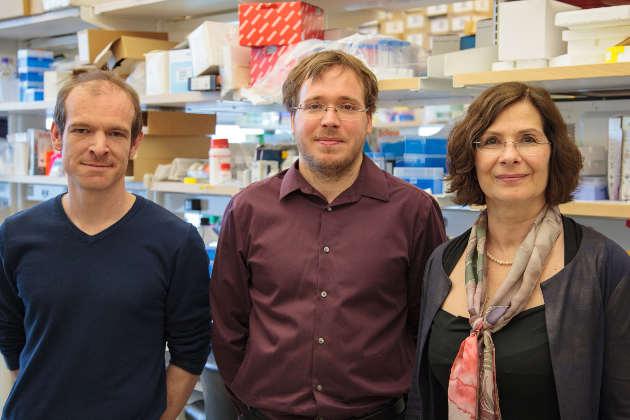From left: Postdoctoral researchers Romain Bouziat and Reinhard Hinterleitner, and Prof. Bana Jabri. Photo by Matt Wood