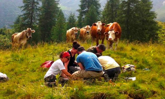 Beobachter verfolgen mit Interesse, wie Innsbrucker MikrobiologInnen in Val di Rabbi, im italienischen Trentino, dem Abbau von Totholz auf den Grund gehen. (Image credit: Judith Ascher-Jenull)