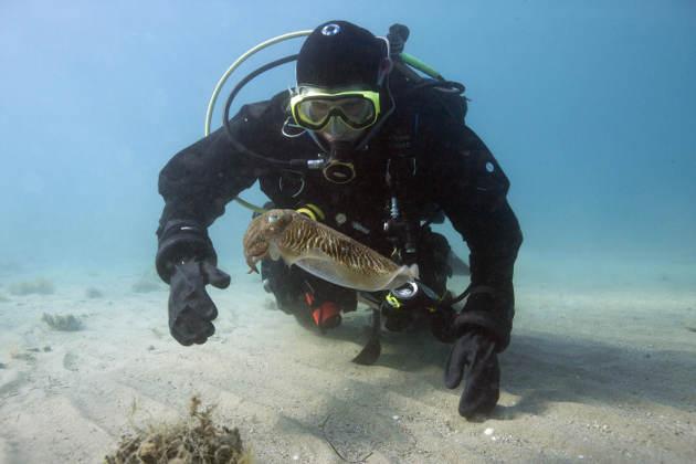 Justine Allen swims with a cuttlefish off the coast of Turkey in the Aegean Sea. Photo by Derya Akkaynak