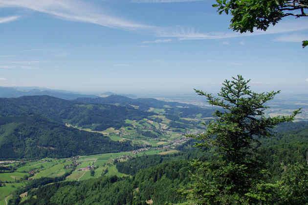 Große Teile des Schwarzwalds und anderer Landschaften in Mitteleuropa sind dominiert von Fichtenwäldern, die vom Klimawandel besonders bedroht sind. Foto credit: Jürgen Bauhus