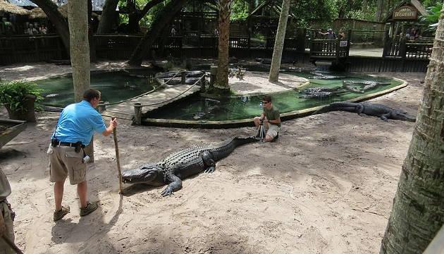 Jim Darlington (links) und Stephan Reber messen die Körperlänge eines männlichen Mississippi-Alligators. Dieses Tier ist 363 cm lang (Image copyright:Judith Janisch).