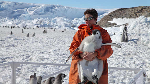 WHOI biologist Stephanie Jenouvrier, seen here holding a young Emperor penguin, says the study's findings conclude that the Emperor penguin is deserving of protection under the Endangered Species Act. (Photo courtesy of Stephanie Jenouvrier, Woods Hole Oceanographic Institution)