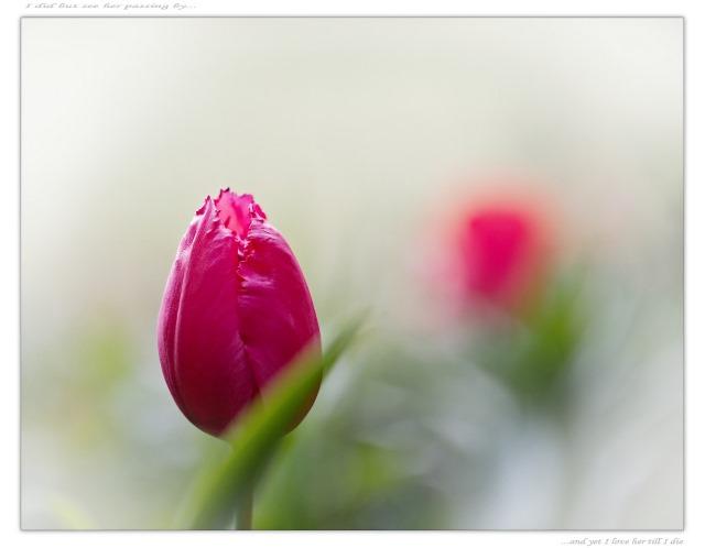 """Bärbel: """"Du bist für mich das schönste Geschenk."""" (Image credit: Kevin Rheese, Source: Flickr)"""