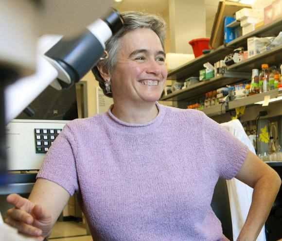 In a new study, researchers led by neuroscience Professor Anne Hart describe a complex cause-and-effect sequence that might underlie some of the problems seen in spinal muscular atrophy.  Image credit:  Brown University