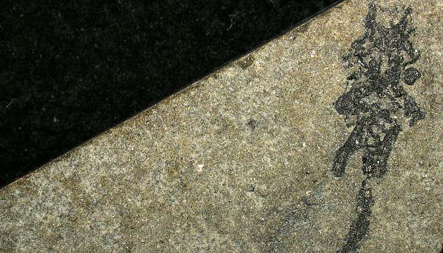 mysterioese fossil, palaeospondylus, knochenfischen, lungenfischen, cathrin pfaff, fossiles exemplar, palaeospondylus gunni
