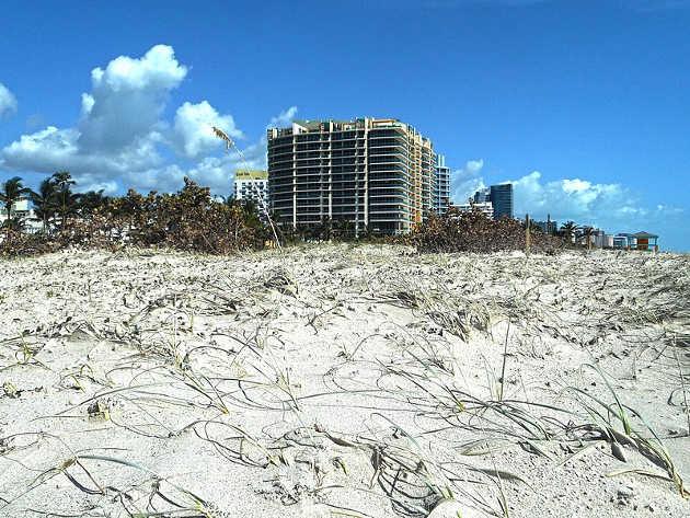 Hurricane Irma 2017 - Miami Beach - Damage caused to dune vegetation in South Beach. Photo credit: Daniel Di Palma (Source: Wikipedia)