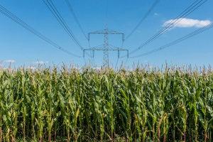 """Die Wissenschaftler stellten einen Kraftstoff aus """"Corn beer"""" her, einem Abprodukt der Bioethanolherstellung aus Mais. Foto credit: UFZ / André Künzelmann"""