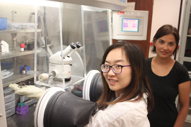 Rong Zhang (left), graduate student in Shanti Deemyad's lab and co-author of the study, holds a high pressure diamond anvil cell inside a glovebox used to prepare lithium samples. Photo credit: Saveez Saffar