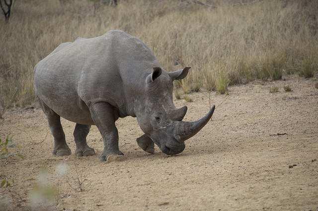 Welgevonden Game Reserve is using IBM's IoT technology to prevent rhino poaching. Image credit: IBM