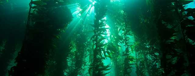 Tangwälder haben eine wichtige ökologische und wirtschaftliche Funktion. Image credit: NOAA (Source: Flickr)