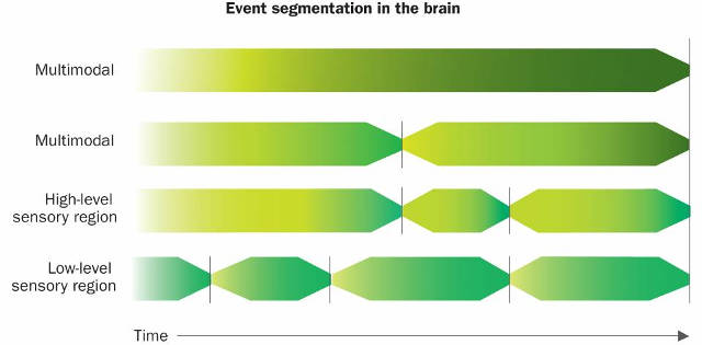 The researchers propose that sensory regions of the brain break experience into short chunks, as shown at the bottom of the illustration, which are then combined into longer and longer events by other brain regions, as seen at the top. These longer events can combine both audio and video information. When an event ends, it is stored in long-term memory. Image credit: Redrawn from a graph courtesy of the researchers