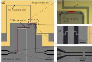 Hybride Quantenarchitektur: Supraleitender Chip mit gefangenen Atomen. Image credit: Universität Tübingen (Click image to enlarge)