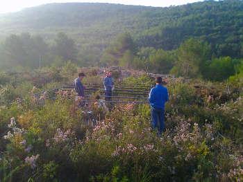 In automatisierten Unterständen im Garraf National Park bei Barcelona wurden Pflanzen erhöhter Trockenheit oder erhöhten Temperaturen ausgesetzt. Foto credit: Josep Peñuelas