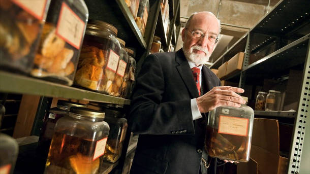 Dennis Spencer MD, chair of the Department of Neurosurgery at Yale Medicine, examines a specimen in Harvey Cushing's brain collection. Image credit: Terry Dagradi