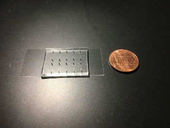 A device, not much larger than a penny, designed by UCLA biophysicists Amy Rowat and Kendra Nyberg, allows scientists to rapidly determine a single cell's stiffness and size. Image credit: Kendra Nyberg/UCLA