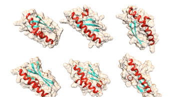 Possible shapes for the yeast protein Bsc4 that the computer algorithm QUARK predicted using only the protein's amino acid sequences. (Image credit: Matthew Cordes, using UCSF Chimera molecular graphics package)